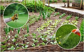 Использование гербицидов