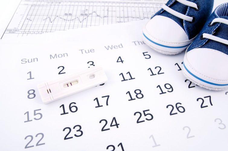 Как вычислить дату овуляции