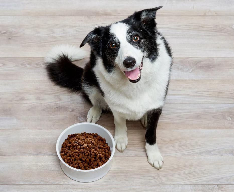 Выбираем лучший корм холистик для собак