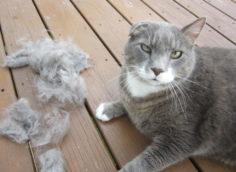 Кот сильно линяет