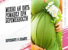Ромашка при беременности
