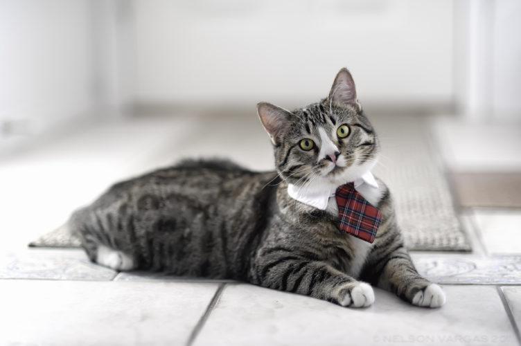 Язык кошек перевод